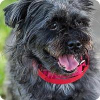 Adopt A Pet :: Ava - Miami, FL