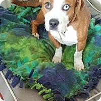 Adopt A Pet :: Daffy - Cincinnati, OH