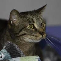 Adopt A Pet :: Charlie - Ottumwa, IA