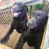 Adopt A Pet :: Gunner #4 - Yorktown, VA