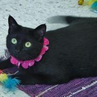 Adopt A Pet :: LuLu - Chambersburg, PA