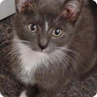 Adopt A Pet :: Kaboodle - N. Billerica, MA