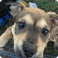 Adopt A Pet :: Vern - Darien, GA