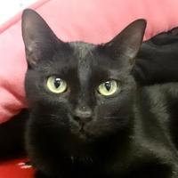 Adopt A Pet :: Elijah - Austin, TX