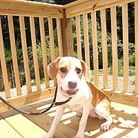 Adopt A Pet :: GiA - LAKEVILLE, MA