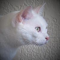 Adopt A Pet :: Joie - Gonzales, TX