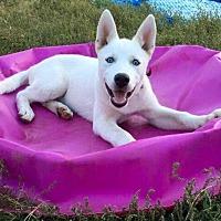Adopt A Pet :: Bonnie - Manhattan Beach, CA