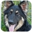 Photo 2 - German Shepherd Dog Mix Puppy for adoption in Los Angeles, California - Lulu von Laubach
