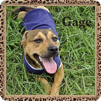 Dachshund Mix Dog for adoption in Corpus Christi, Texas - Gage