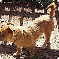 Adopt A Pet :: Benny - Seneca, SC