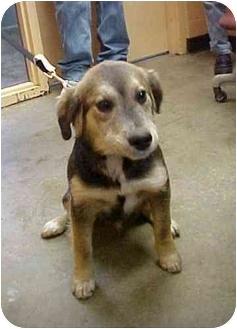 Spaniel (Unknown Type) Mix Dog for adoption in Cambridge, Ohio - Mikey