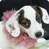Adopt A Pet :: Jade - Wytheville, VA