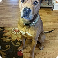 Adopt A Pet :: Rusty - Davison, MI