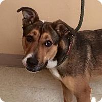 Adopt A Pet :: Spring - Woodward, OK