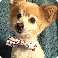 Adopt A Pet :: Marco - Cerritos, CA