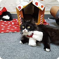Adopt A Pet :: Tuxcina - Pasadena, CA
