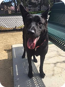 Shepherd (Unknown Type) Mix Dog for adoption in San Ramon, California - MeiMei