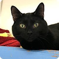 Adopt A Pet :: Denzel - Colorado Springs, CO