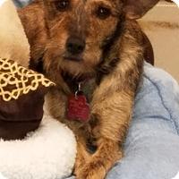 Adopt A Pet :: JoJo - Deer Park, TX