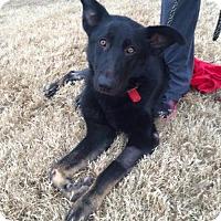 Adopt A Pet :: Mallory - Morrisville, NC