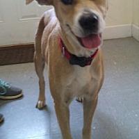 Adopt A Pet :: Nova - Glenwood, GA