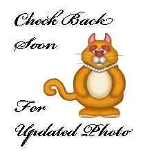 Domestic Longhair Cat for adoption in San Clemente, California - MR. BURNS