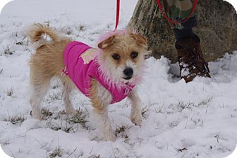 Terrier (Unknown Type, Small) Mix Dog for adoption in Elyria, Ohio - Mary Jane