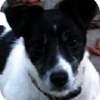 Adopt A Pet :: Harley - Rhinebeck, NY
