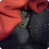 Adopt A Pet :: Stormy - Kohler, WI