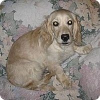 Adopt A Pet :: C.C. - Chandler, AZ