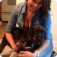 Adopt A Pet :: Jack - Santa Monica, CA