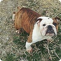 Adopt A Pet :: Lena - Denver, IN