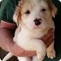 Adopt A Pet :: Turkey - Gainesville, FL