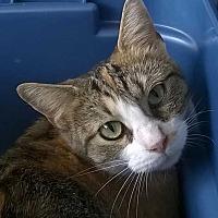 Adopt A Pet :: Cloey - Brighton, MO