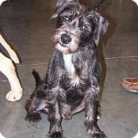 Adopt A Pet :: Freddy - Lafayette, LA