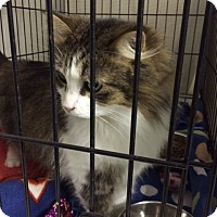 Adopt A Pet :: Tink - Byron Center, MI