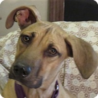 Adopt A Pet :: Lady Babs!  Easy Going. - St Petersburg, FL