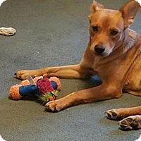 Adopt A Pet :: Picabo Street - Wyoming, MI