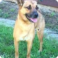 Adopt A Pet :: Coco (Adoption Pending) - Rexford, NY
