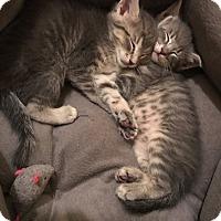 Adopt A Pet :: Faith - St. Louis, MO