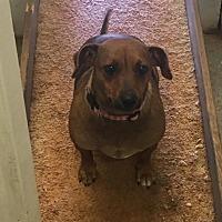 Adopt A Pet :: Tatsie - York, SC