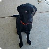 Adopt A Pet :: Kirby - New Richmond,, WI