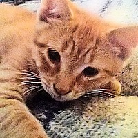 Adopt A Pet :: Sunshine - Morganton, NC