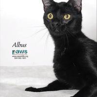 Adopt A Pet :: Albus - Belle Chasse, LA
