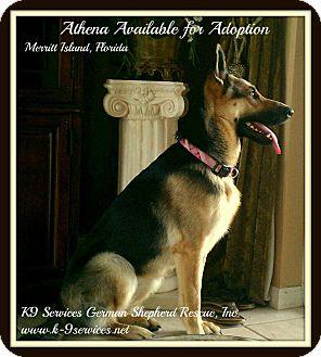 German Shepherd Dog Dog for adoption in Green Cove Springs, Florida - Athena