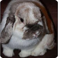 Adopt A Pet :: Luna - North Gower, ON