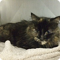 Adopt A Pet :: Tula - Byron Center, MI
