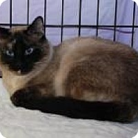 Adopt A Pet :: Mae Mae - Cleveland, OH