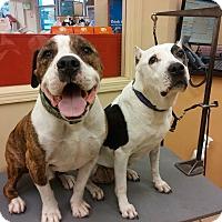 Adopt A Pet :: Nytris - Yorba Linda, CA