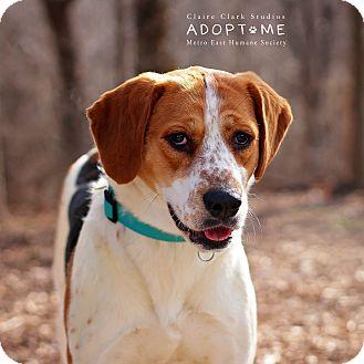 Hound (Unknown Type) Mix Dog for adoption in Edwardsville, Illinois - Sasha